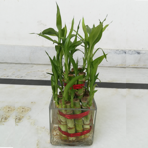 7627_2-layer-bamboo-plant.png