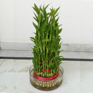 6 Layers Bamboo Plant